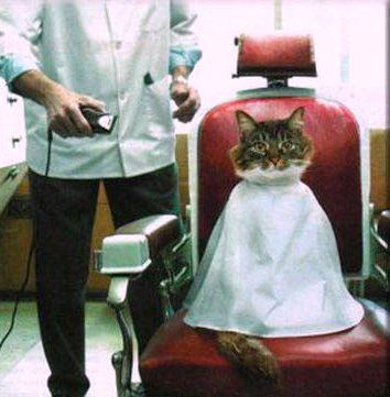 kat bij kapper